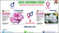 2016 Rosy Adenium
