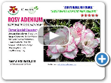 2014 Rosy Adenium Hall of Fame