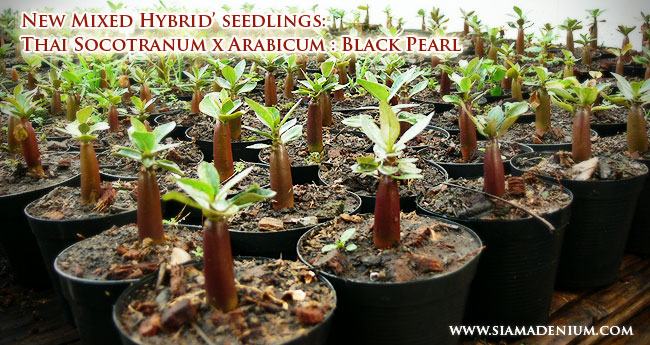 Sowing Seeds betterform
